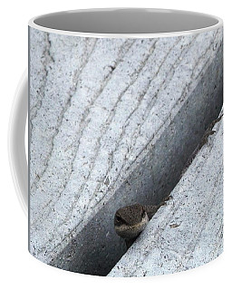 Coffee Mug featuring the photograph Larry The Hungry Lizard by Belinda Lee