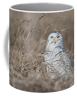 Last Year Of The Snowy Owls... Coffee Mug