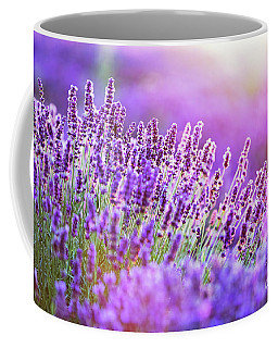 Lavender Flower Field At Sunset. Coffee Mug