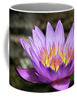 Lavender Water Lily #3 Coffee Mug
