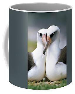 Laysan Albatross Phoebastria Coffee Mug