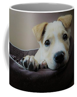 Coffee Mug featuring the photograph Lazy Day by Aaron Martens