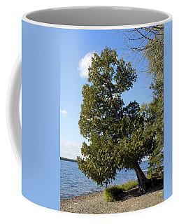 Leaning Cedar Coffee Mug
