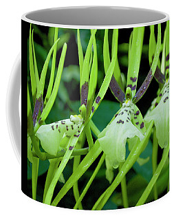 Leap Frog Coffee Mug