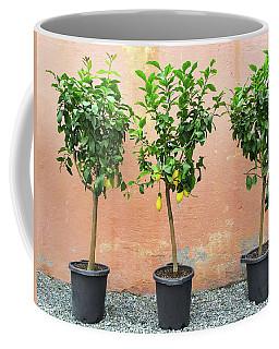 Lemon Trees With Ripe Fruits Coffee Mug