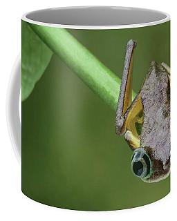 Coffee Mug featuring the photograph Lemur Tree Frog - 1 by Nikolyn McDonald