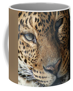 Coffee Mug featuring the photograph Leopard Face by Richard Bryce and Family