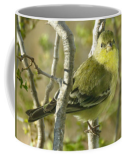 Lesser Goldfinch 1 Coffee Mug