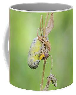 Lesser Goldfinch 4057-071117-1cr Coffee Mug