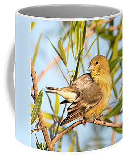 Coffee Mug featuring the photograph Lesser Goldfinch by Dan McManus