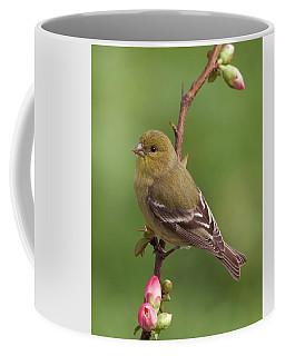 Lesser Goldfinch Coffee Mug by Doug Herr