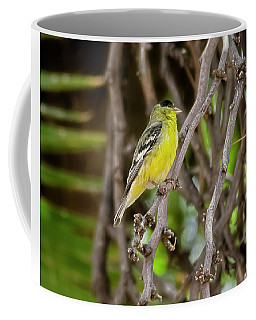 Coffee Mug featuring the photograph Lesser Goldfinch H57 by Mark Myhaver