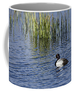 Lesser Scaup Adult Male Coffee Mug
