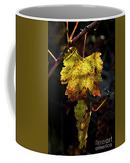 Coffee Mug featuring the photograph Let The Sunshine In by Elaine Teague