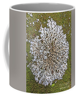 Lichen On Moss Coffee Mug