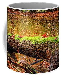 Coffee Mug featuring the photograph Life Cycle by Dmytro Korol