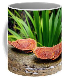 Life On A Log Coffee Mug