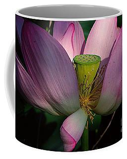 Light On The Lotus Coffee Mug by John S
