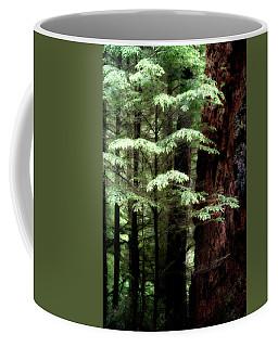 Light On Trees Coffee Mug