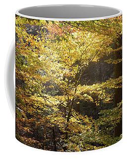 Light In The Leaves Coffee Mug