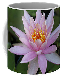 Lilly In Pink Coffee Mug