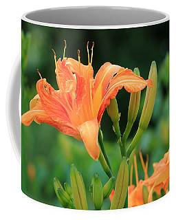 Coffee Mug featuring the photograph Lily Of The Evening by Rick Morgan