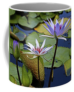 Coffee Mug featuring the photograph Lily Trio by Judy Vincent