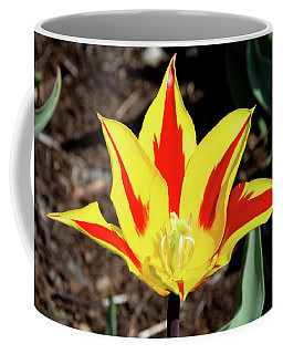 Lily Tulip Coffee Mug