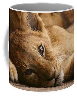 Lion Cub Coffee Mug