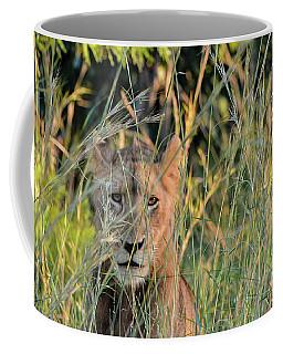 Lion Warily Watching Coffee Mug
