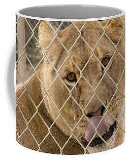 Lioness Licks Coffee Mug