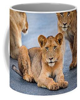 Coffee Mug featuring the photograph Lions Stare by Gaelyn Olmsted