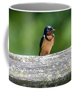 Coffee Mug featuring the photograph Little Barn Swallow by Ricky L Jones