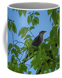 Little Bird In The Tree  Coffee Mug