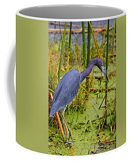 Little Blue Heron Feeding Coffee Mug