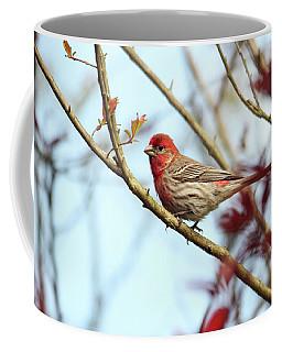 Little Finch Coffee Mug
