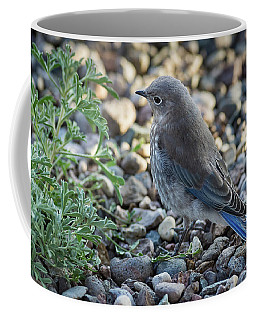 Little Fledgling Mountain Bluebird Coffee Mug
