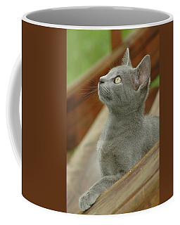 Little Gray Kitty Cat Coffee Mug