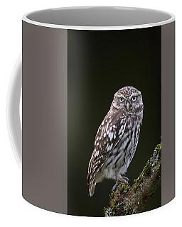 Little Owl Coffee Mug