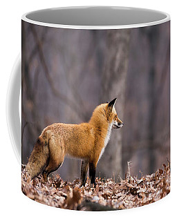 Coffee Mug featuring the photograph Little Red Fox by Andrea Silies
