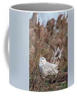 Little Snowy Owl Coffee Mug