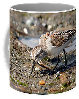 Little Western Sandpiper Coffee Mug