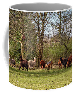 Coffee Mug featuring the photograph Alpacas In Scotland by Jeremy Lavender Photography