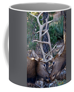 Locking Horns - Well Antlers Coffee Mug
