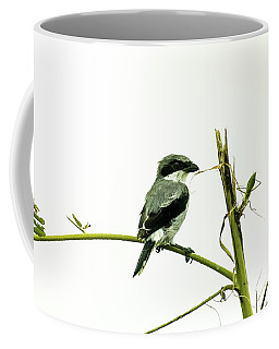Loggerhead Shrike And Mantis Coffee Mug
