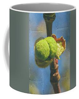 Coffee Mug featuring the photograph London Plane Buds A - Platanaceae Fine Art by Jacek Wojnarowski