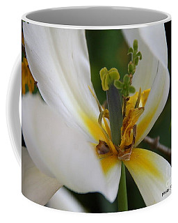 Coffee Mug featuring the photograph London White Tulip by Jolanta Anna Karolska