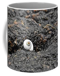 Lone Seashell Coffee Mug