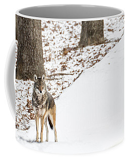 Coffee Mug featuring the photograph Lone Winter Coyote by Andrea Silies