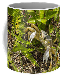 Lonely Atlantic Ghost Crab Coffee Mug